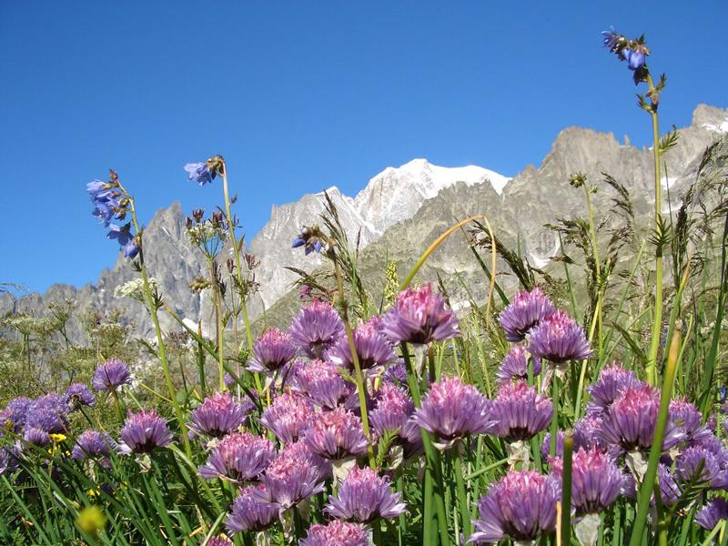Erba cipollina con Monte Bianco