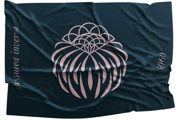 bandiera saussurea inversa